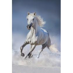 cheval galopant dans la neige