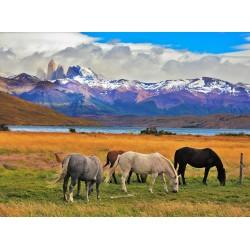 chevaux avec un beau paysage